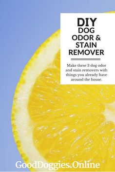 Effective Diy Method For Removing Urine Stains And Smell