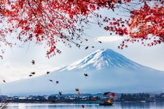 Red Maple Fuji by Andrew Fan on 500px