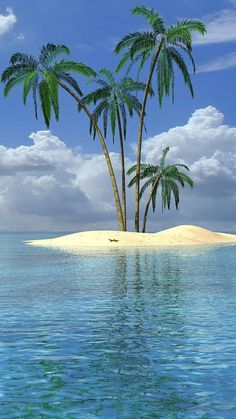 Beach Landscape With Palm Tree wallpaper. Ocean Beach, The Beach, Images Cools, Cool Pictures, Beautiful Pictures, Beach Scenes, Tropical Paradise, Paradise Travel, Tiny Paradise