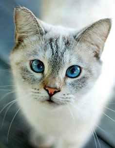 Blue-eyed girl~