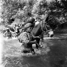Pack Mules crossing a river in Vietnam