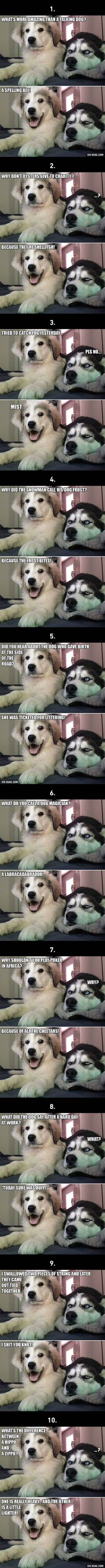 "Viral pictures of the day: 10 Best ""Bad Puns Dog"" Memes Ever"