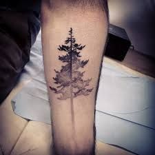 Image result for tall pine tree silhouette