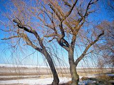 Winter Willow 1