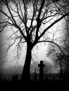 This graveyard reminds me of the convict because of the cold, gloomy, damp,and darkness in it.