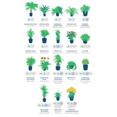 Here is a list of indoor plants which are most effective at filtering these harmful toxins and pollutants from the air.