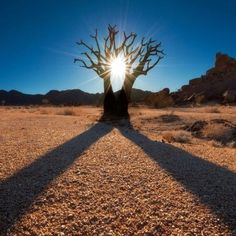 A Twin Kokerboom creates symmetrical shadows on the arid land of the Richtersveld National Park in the Northern Cape region of South Africa. Tree Forest, Beautiful Sky, Wildlife Photography, Monument Valley, South Africa, Sunrise, National Parks, Landscape, Nature
