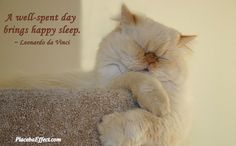 Inner Splendor: We love sleep!