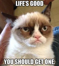 Funny pictures about Grumpy Cat finds Nemo. Oh, and cool pics about Grumpy Cat finds Nemo. Also, Grumpy Cat finds Nemo. Grumpy Cat Quotes, Meme Grumpy Cat, Cat Memes, Funny Memes, Grumpy Kitty, Memes Humor, Funny Quotes, Funny Videos, It's Funny