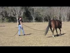 Tips for Success in Finding Sweet Spot On Line: Great video form Karen Rohlf on how students can play with Finding the Sweet Spot for Healthy biomechanics on line with greater success ... and keep your horse's partnership!  Love this quote from the video: *Play so your horse feels he is the KING! And he will share his kingdom with you.* #horse #equine