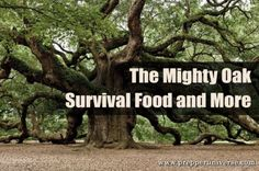 The Mighty Oak: Survival Food and More | Prepper Universe