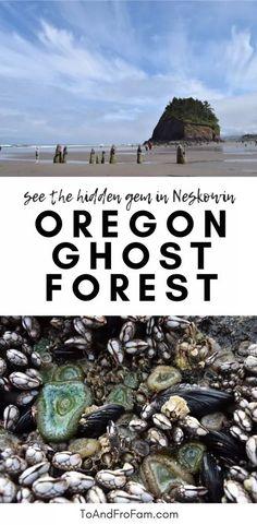Neskowin Ghost Forest: Oregon Coast's Disappearing Trees (w/ pictures!) Neskowin Ghost Forest: Oregon Coast's Disappearing Trees (w/ pictures! Road Trip Oregon, Oregon Vacation, Oregon Trail, Vacation Spots, Oregon Coast Roadtrip, Oregon Forest, Neskowin Oregon, Neskowin Beach, Brookings Oregon