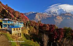 Tadapani guest house, Nepal | Flickr - Photo Sharing!