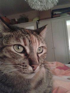 josy Katze | Pawshake Erkelenz