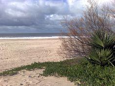 dunas, tamariscos, mar