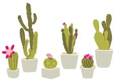 Cactus Vectors, Photos and PSD files | Free Download