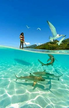 a girl paddle boarding with sharks in the crystal clear waters of French Polynesia. Photo by Chris Mclennan (summer sun paddle boarding) Under The Water, Under The Sea, Surfing Lifestyle, Fauna Marina, Shark Photos, Reef Shark, Shark Bait, Shark Shark, Whale Sharks