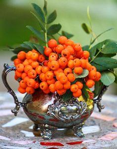 orangenfarbene Beeren in einer Vintage Teekanne