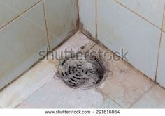 Black mold growing on shower tiles in bathroom. Diy Mold Remover, Bathroom Mold Remover, Mold In Bathroom, Mildew Remover, Mold Removal, Shower Tiles, Shower Tub, Diy Shower, Mold Exposure