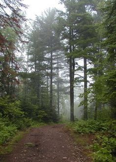 "Tettegouche State Park. The foggy trail on the North Shore of Lake Superior. 58 mailes northeast of Duluth, MN Drive along Minnesota's scenic Highway 61 and see all of the beauty. Don't forget to look for the ""Pie Shoppe"""