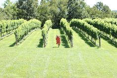 THE BEST OF VIRGINIA WINE COUNTRY: PIPPIN HILL FARMS - The perfect girls getaway!