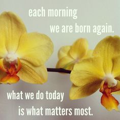 each morning we are born again. what we do today is what matters most.  #quote #motto #orchid #yellow #flower