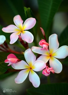 Tropical Pleasure by Cindy Graham on 500px