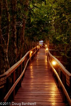 Lighted walkways to the cottages