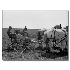 Vintage postcard, horse-drawn corn planter, 1940.