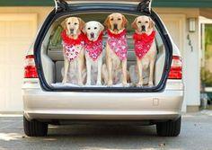 10 Tips para transportar a mi perro en coche