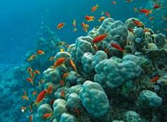 Reef-building #corals create habitats for many other organisms. The #CoralsReefs of the Red Sea are highly diverse and unique in the world, providing shelter and sustenance for abundant fishes and other marine life - @Nobeltec supports a healthy #Ocean!