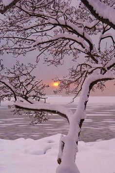 Winter Sunset, Lauttasaari, Finland photo via sheila. I really want to go to a winter wonderland Winter Sunset, Winter Love, Winter Snow, Winter Night, Winter White, Winter Trees, Snowy Trees, Deep Winter, Cold Night