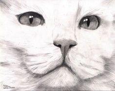 White Turkish Angora Cat Drawing by Joshua Hullender | ArtWanted.com