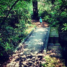 photo by michellelncln: Ramble trail #hiking