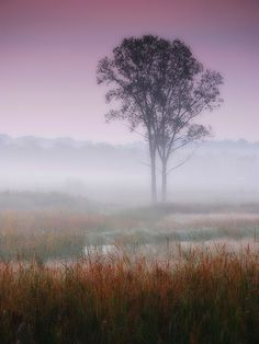 Misty autumn dawn by James Jordan, via Flickr