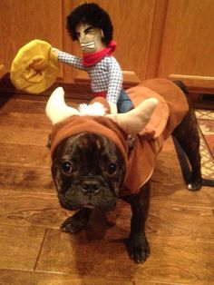 French Bulldog Bull rider ..Love this costume from Target!