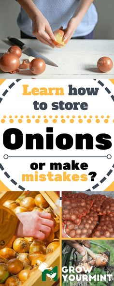 Here's how to store onions, keep them fresh and close at hand. Luckily, the procedure is not difficult, just follow the instructions, and you will be good to go. #onions#store#vegetables#garden#gardening#growyourmint.com