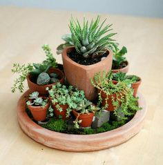 Succulents in containers, cacti and succulents, planting succulents, cactus