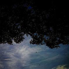 Olhar o céu  #sky #skycolors #skylovers #cloudsgalery #clouds #photoofclouds #gardener #arbor #natureart #nature #mybest_nature #animalstyle #animallovers #love #TagsForLikes #motofoto #igers #igersES #ig_espiritosanto #colors #epic_capture #enjoy #bluesky #notfilter #pixrlexpress #birds #fly #flying