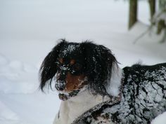 Daisy May - Fun in the Snow