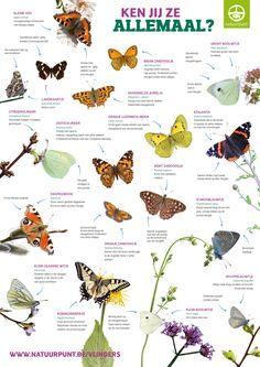 Meest voorkomende tuinvlinders België