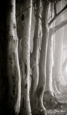 Woods https://www.etsy.com/shop/ArtDesignShop