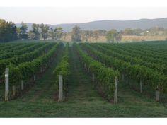 6 Winery Road Trips in Loudoun County