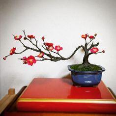 BONSAI ART JAPAN 紅梅 https://www.facebook.com/bonsaiartjapan/