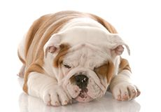 Five Steps for Handling Pet Poisonings | petocracy