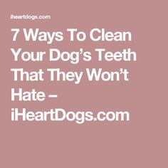 7 Ways To Clean Your Dog's Teeth That They Won't Hate – iHeartDogs.com