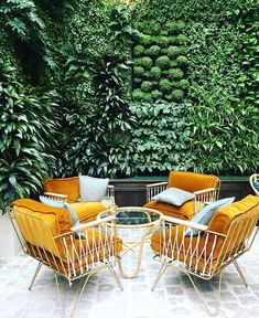 chic mustard outdoor chairs & a living wall! Outdoor Chairs, Outdoor Furniture Sets, Outdoor Decor, Outdoor Seating, Garden Seating, Lounge Chairs, Pool Chairs, Bag Chairs, Garden Chairs