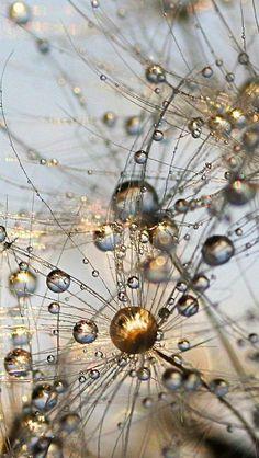 tinnacriss: grass_drops_dew_rain_form_9467_640x1136 (by vadaka1986):