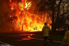 """Australia's """"catastrophic"""" heat wave and bushfires force an emergency declaration (CBS News) Battle Towers, Bushfires In Australia, American Firefighter, Bird People, Climate Change Effects, Environmental Issues, New South, Blue Mountain, National Parks"""