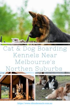 We are Australia's one of the leading service provider of pet accommodation to car for them when you are going out of station. Visit our website to know more. Dog Boarding Kennels, Pet Boarding, Cat Dog, Melbourne, Australia, Website, Pets, Car, Automobile